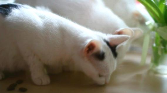 Koty - Lala, Mysia, Pusia