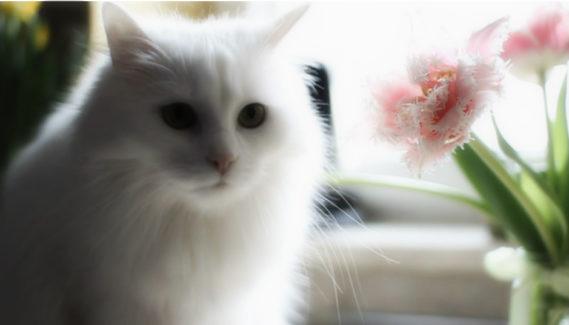 Jedna z naszych kotek - Pusia