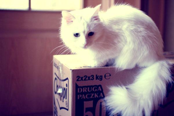 A to już tak na rozbawienie :) Czy Wasze koty (a może pdy też?) zawsze interesują się pudełkami?