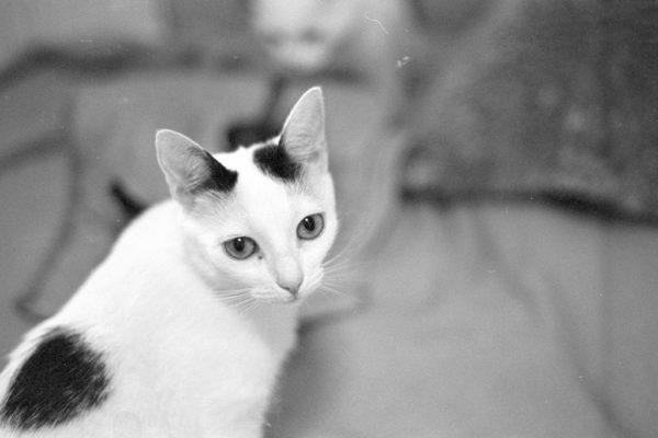 Lala kot z domu tymczasowego