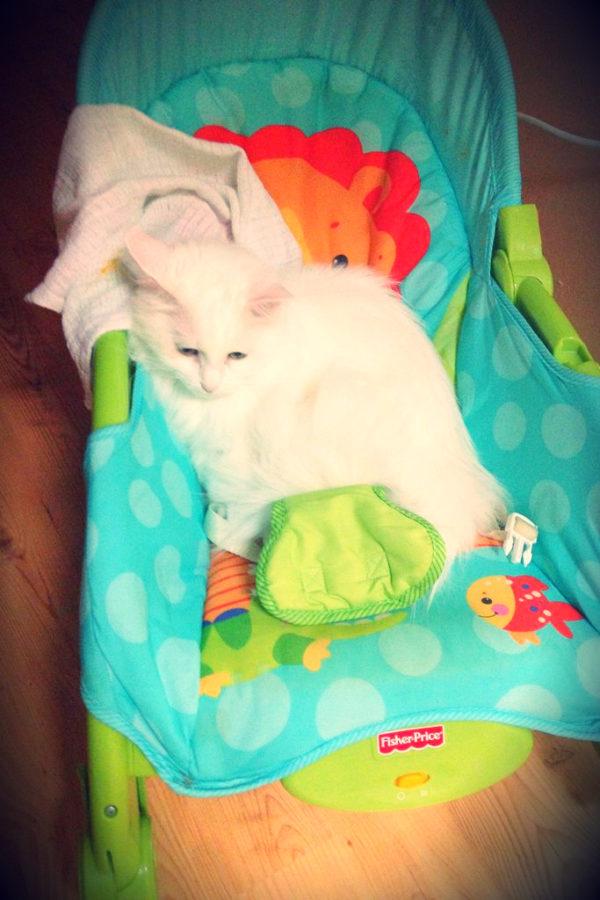 Kot na bujaczku – nocna zmiana