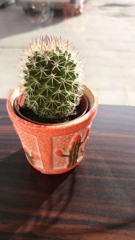 To zdjęcie Michała :) Szczerze, nie wiem, ale chyba sprawdzał możliwości naszego Sony... na kaktusie (?)