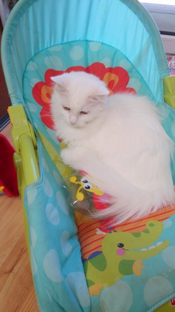 I kot leżakujący