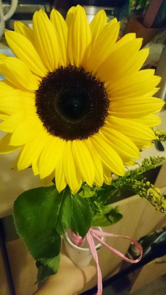 Kwiat(y) od męża :)