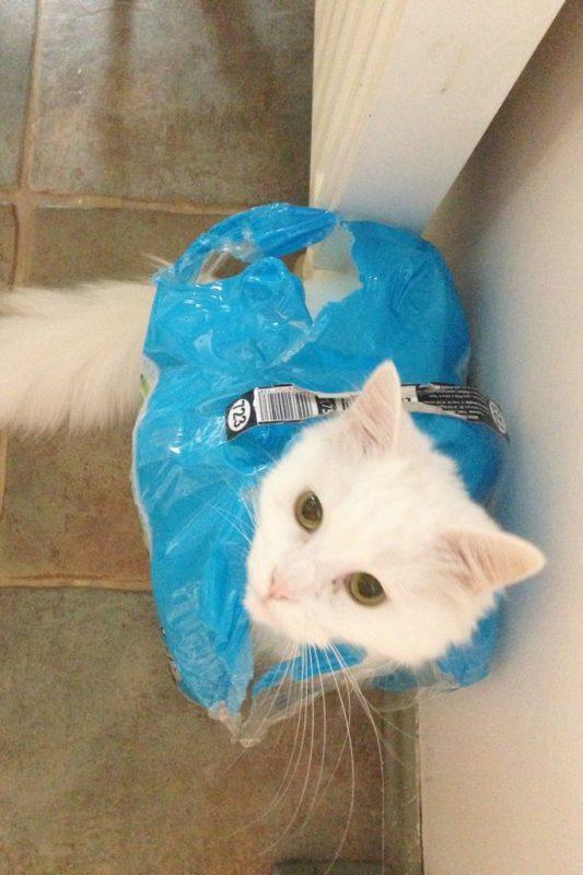 Kot, który jest butelkami - naprawdę nie wiem skąd te koty mają takie pomysły