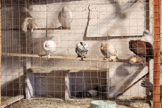 Ptaki - dzieci zafascynowane :)