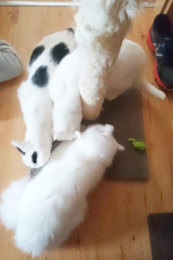 A tutaj zwabiłam wszystkie koty, proszę nasze trzy :)