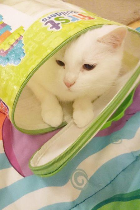 A to robią koty, gdy dziecko już śpi, czyli świetna zabawa w dziecięcym świecie