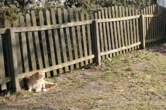 Rozbrajający kot