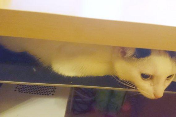 Koty są jednak dziwne naprawdę ona wcisnęła się na podstawkę na klawiaturę