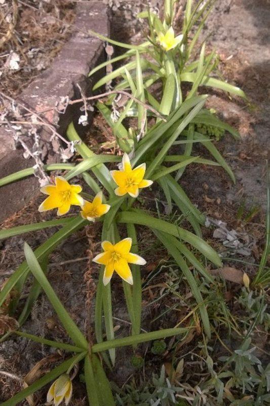 Wiosna :) uwielbiam, jak wszystko zaczyna kwitnąć