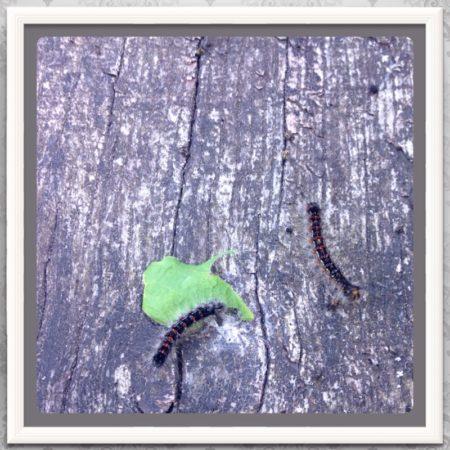 A te robaki zlatują z drzew, brrrrr