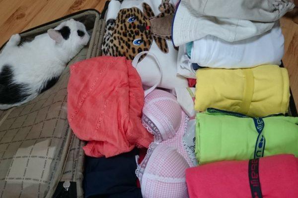 I pakowanie w kolejną podróż, kot wie najlepiej co i jak