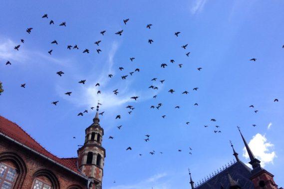 I toruńskie gołębie :D