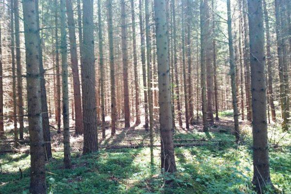 Idziemy lasem, dość tajemniczym i pięknym