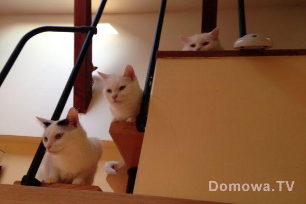 Trzy koty, to takie mało spotykane by je razem uchwycić na jednym zdjęciu