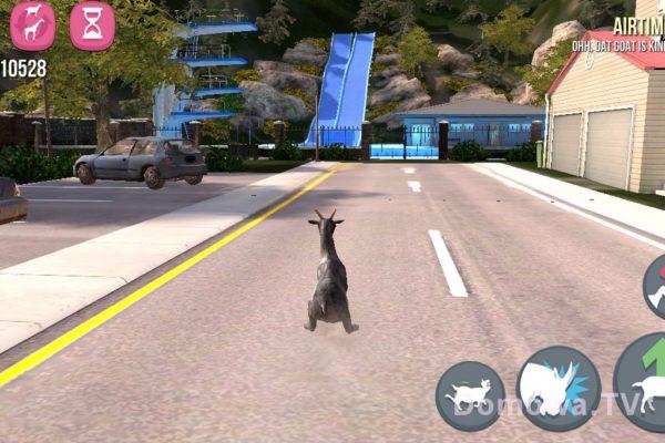 Znalazłam jakieś zdjęcie z… kozą, to Michała jakaś gra :P