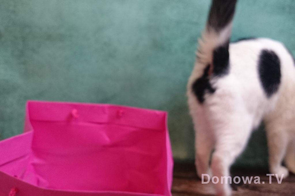 Zwierze to nie prezent