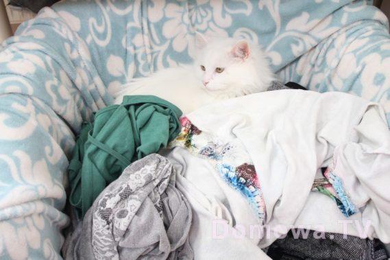 Ile kotów jest na zdjęciu?