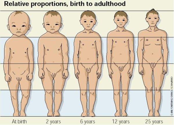 Proporcje fłowy w stosunku do reszty ciała u dziecka. U noworodka głowa jest naprawdę duża w stosunku do reszty ciała, źródło: Vovlo mp