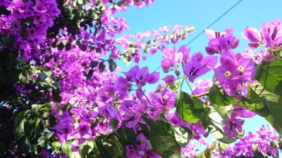 Takie kwiaty chcę w swoim ogrodzie, haha