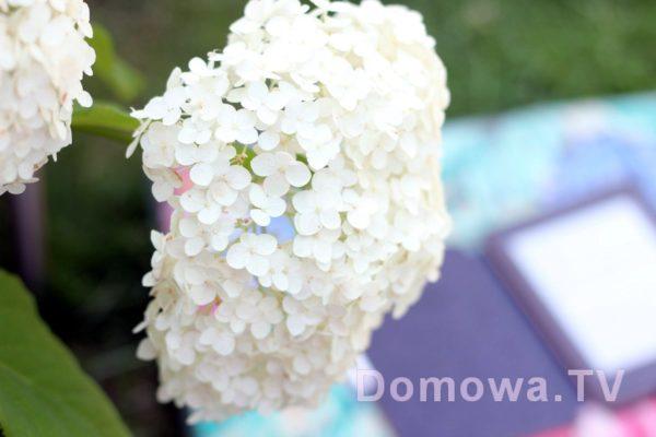 I jeszcze kwiaty mojej Mamy :) jako dodatek :)