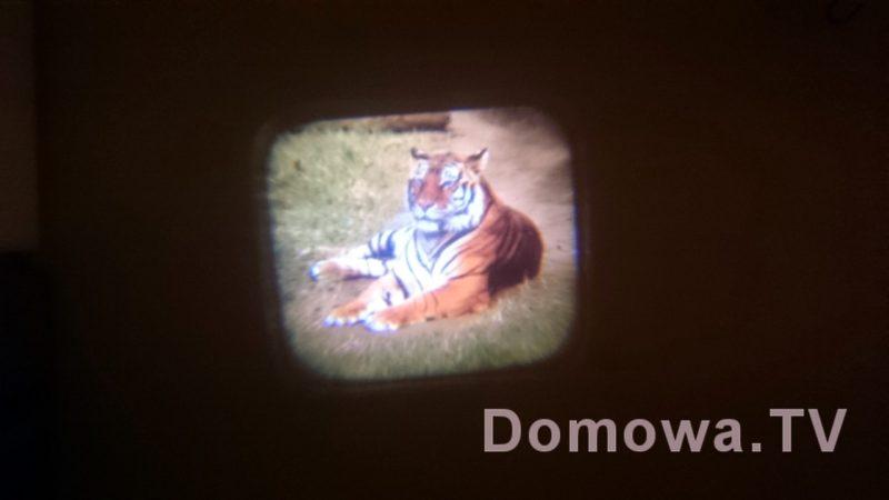 Tygrys, czyli efekt zabawy z projektorem
