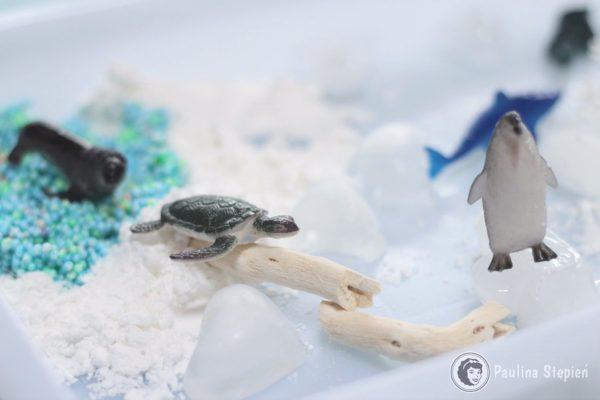 Arktyka, czyli zabawa sensoryczna i nie tylko