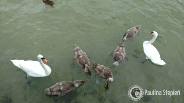 Brzydkie kaczątka hihih :) one są takie śliczne!