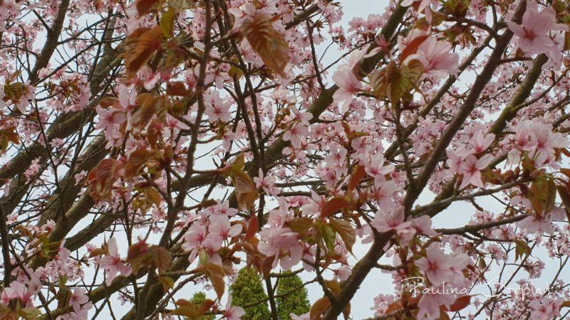 I kilka pięknych widoczków, czyli kwiaty, kwiaty, kwiaty