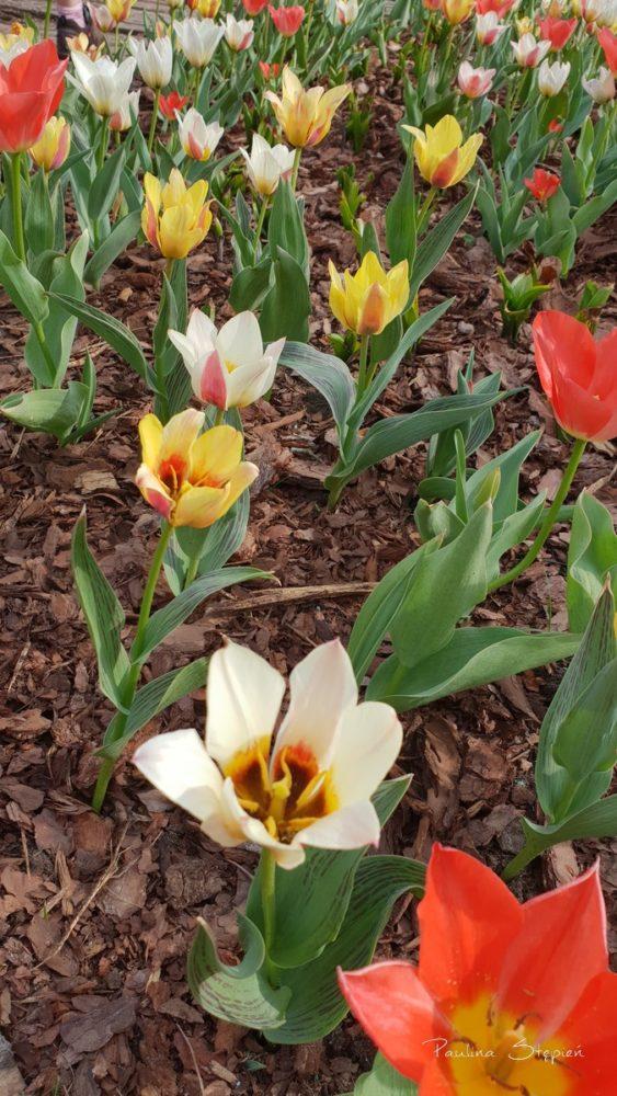 Wiosna - uwielbiam tę porę roku