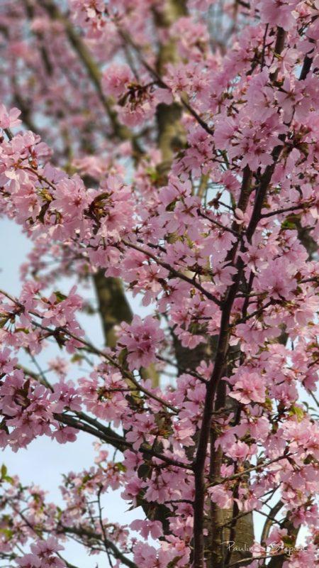 Kwitnące drzewka w kwietniu
