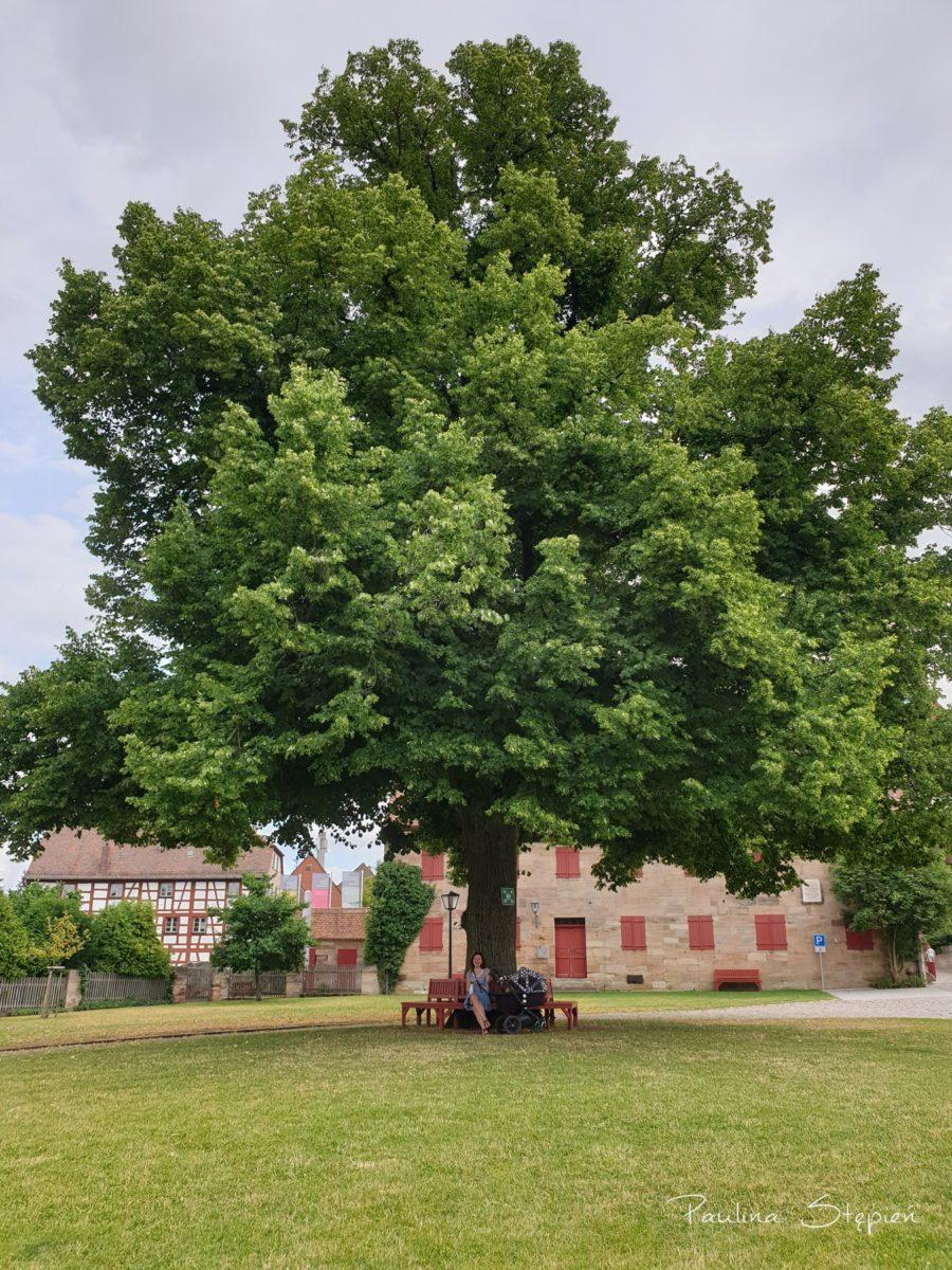 Piękne drzewo