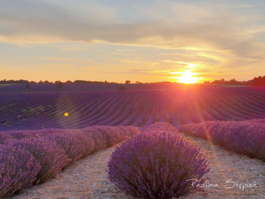 Pola lawendy, Francja oczywiście :)