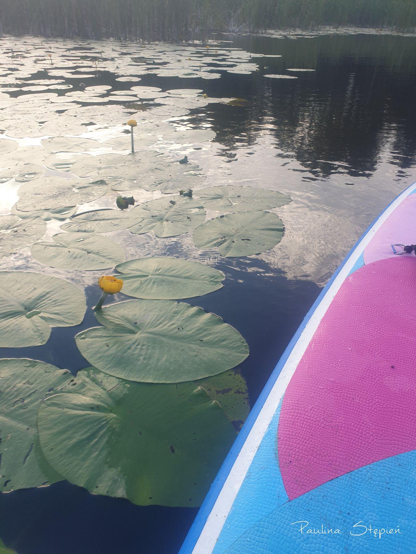 Wodne lilie